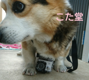 Vemicoドッグマウントfetch GoPro