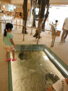 三重県総合博物館MieMuミエゾウ