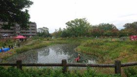 鈴の森公園池の水