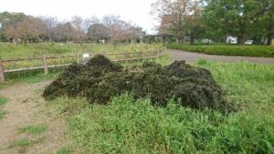 鈴の森公園池掻い掘り