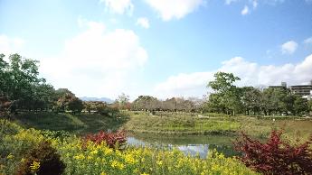鈴の森公園あひるが池