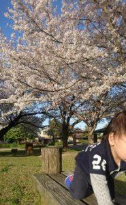 鈴の森公園桜