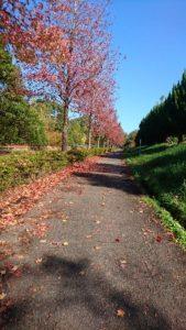 大高緑地紅葉