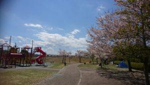 上川町遊歩道公園サクラ