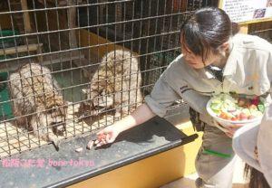 あらいぐま大内山動物園