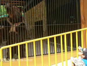 大内山動物園うまぐま