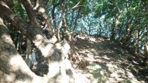 姫越山登山道