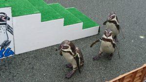 志摩マリンランドペンギン