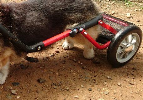 犬用車いすドッグウォーカー