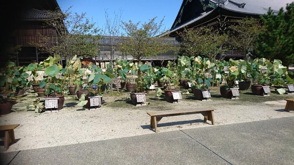 高田本山蓮寺
