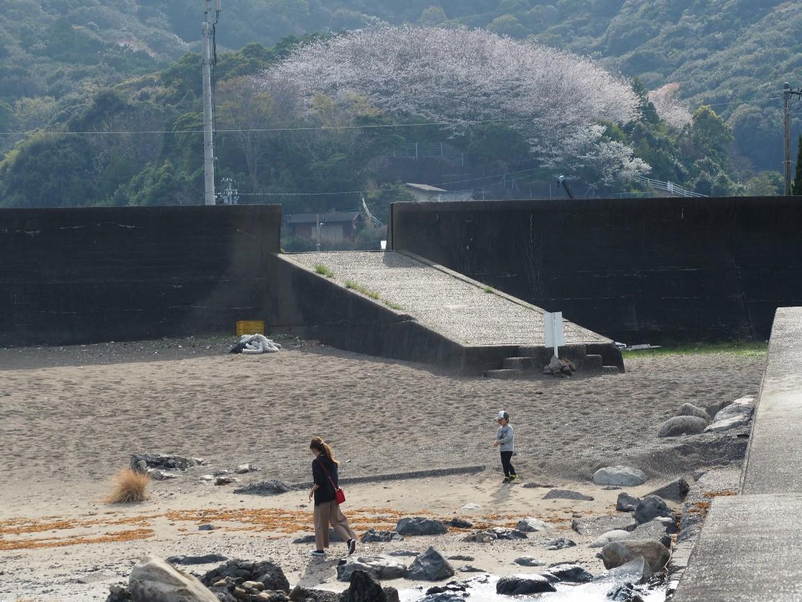 相賀浦夢の千本桜