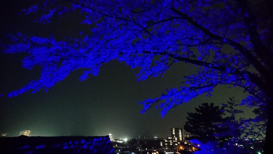 松阪城址桜ライトアップ